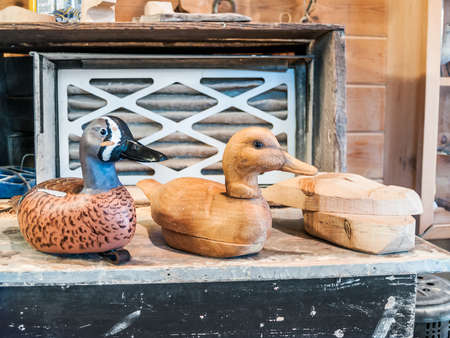 hand carved: Hand carved duck decoys in the various stages of development.