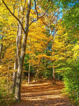 county: An Autumn trail through this woodland in Bucks County Pennsylvania. Stock Photo