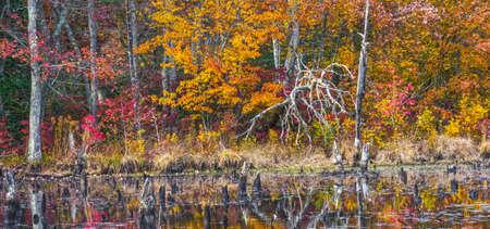 arboles secos: Las hojas de otoño rodean este estanque con árboles muertos en Allaire State Park en Nueva Jersey. Foto de archivo