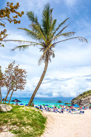 bermuda: HORSESHOE BAY, BERMUDA - MAY 26 - Palm trees and rock formations welcome the tourists to Horseshoe Bay on May 26 2016 in Bermuda.