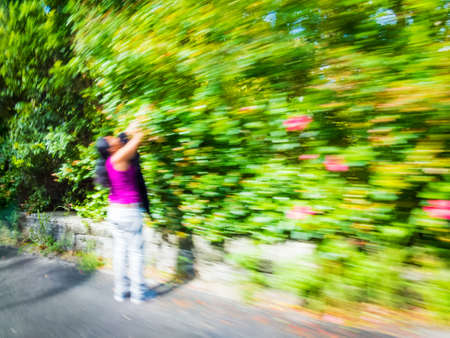 bermuda: A zoom motion blur of a woman picking fruit along a road side in Bermuda. Stock Photo