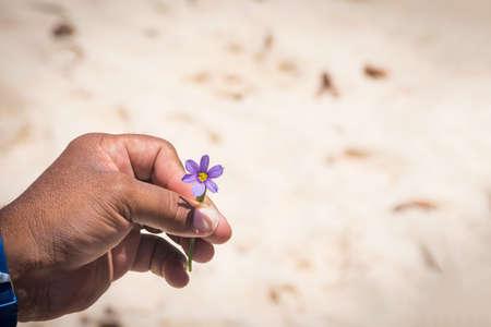 guia turistico: El bermudiana, la flor nacional de las Bermudas en la mano de un guía local.