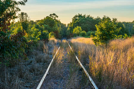 railroad tracks: Diminishing perspective of these railroad tracks through Monmouth Battlefield State Park in New Jersey. Stock Photo