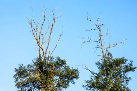 tree branch: Birds resting on tree limbs at the top in Monmouth Battlefield State Park in Freehold New Jersey.