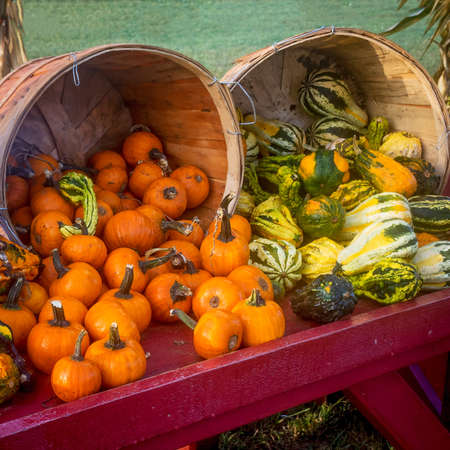 roadside stand: Bushel baskets with gourds and small pumpkins at this roadside stand in Central New Jersey. Stock Photo