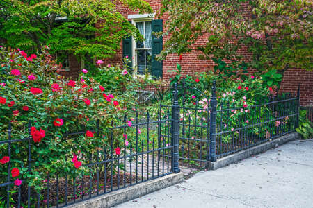 garden gate: A late Summer rose garden along this old iron fence in historic Jim Thorpe Pennsylvania.