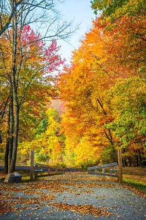 fall leaf: Beautiful Fall foliage at the entrance to Schoolys Mountain Park in Long Valley NJ.