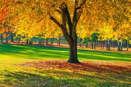 foiliage: Vibrant Fall foiliage in this park in Long Valley New Jersey. Stock Photo