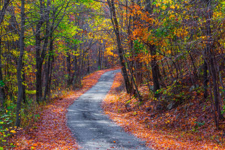 A small winding road passes through Jenny Jump Forest in Warren County New Jersey.