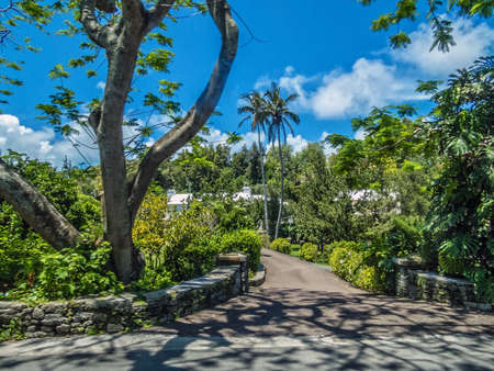 Lush tropical foliage and palm trees along the road in Bermuda.