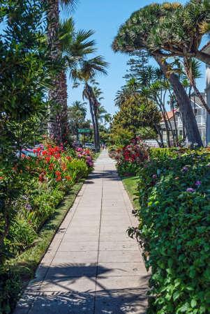 Lush green foliage along the sidewalk in this San Diego neighborhood.