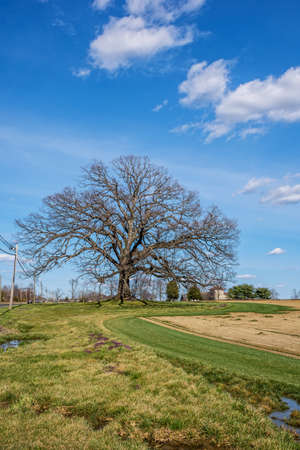 A large shapely tree in early spring in this rural Central New Jersey field. Stock Photo