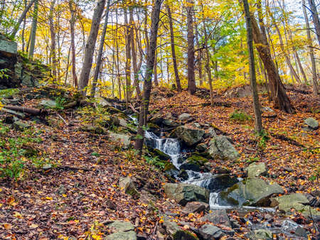 trickles: A small brook trickles down this hill during Autumn in the Pocono Mountains of Pennsylvania. Stock Photo
