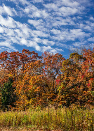 autumn colour: A cloudy blue sky with multicolored leaves in this field in Schoolys Mountain Park in Morris County New Jersey.