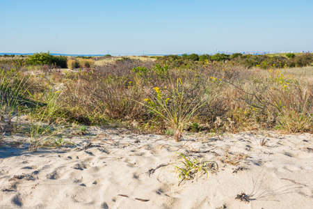 Natural protected sand dunes of Gateway National Recreation Area along the NEw Jersey coastline. Stock fotó - 87424483