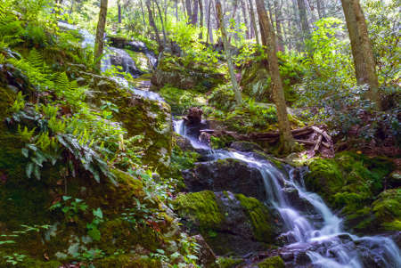 明るい緑色のシダは、ニュージャージー州のストークス州立森林のバターミルクの滝を囲みます。 写真素材