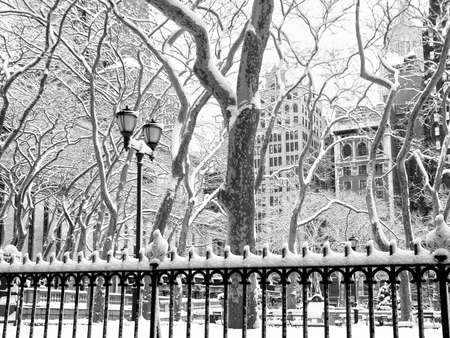 Fresh snow on the sycamore trees in Bryant Park in Manhattan.