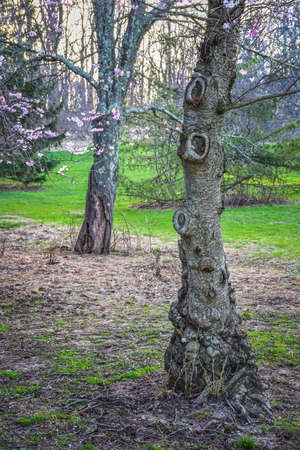 A Spring landscape with a knotty tree trunk in Holmdel Park in New Jersey. Banco de Imagens