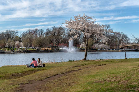 NEWARK, NEW JERSEY - APRIL 21 - A young couple relaxes along the shore of  the Cherry Blossom Festival in Branchbrook Park on April 21 2018 in Newark New Jersey. Sajtókép
