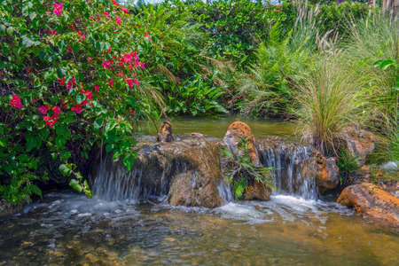 A tropical garden with flowers, ferns, grasses and small waterfall in Fort Laurderdale Florida.