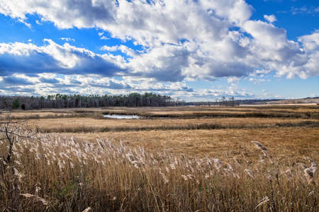 A salt marsh in Cheesquake State Park in New Jersey.