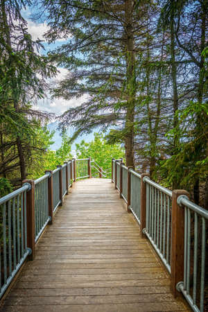 Tall evergreens over this wooden footbridge of Turnagain Arm near Anchorage Alaska.