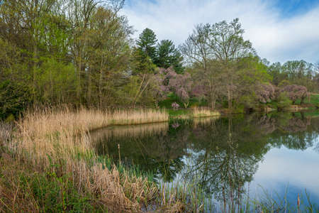 A peaceful Spring scene in Holmdel Park in Monmouth County New Jersey. Stok Fotoğraf