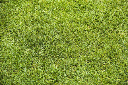 Beautiful Green grass Stock Photo
