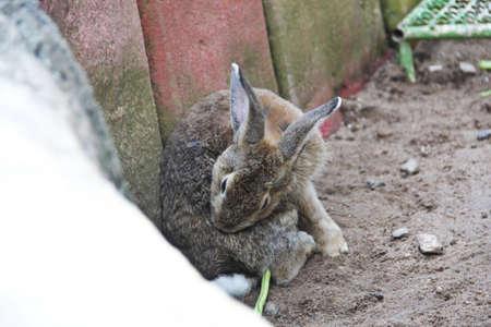 Brown Rabbit Stock Photo