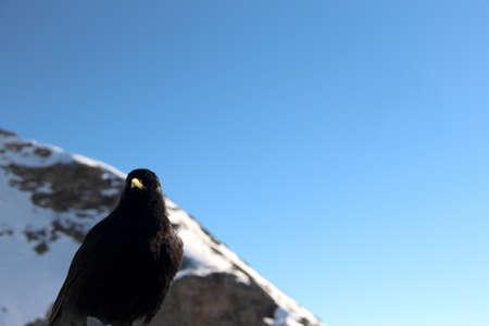 Blackbird stay