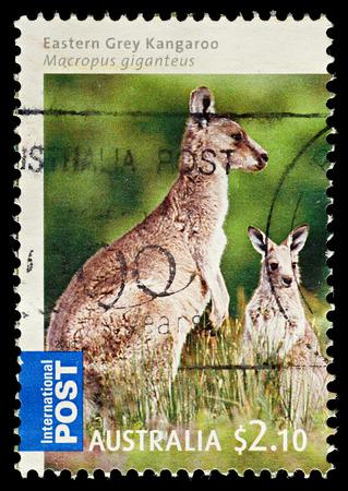 AUSTRALIA - CIRCA 2009  An Australian Used Postage Stamp showing Eastern Gey Kangaroo, circa 2009