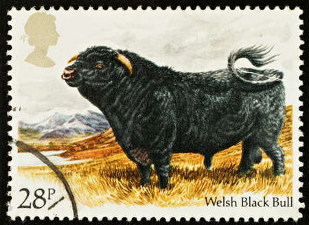 welsh: UNITED KINGDOM - CIRCA 1984: A British Used Postage Stamp showing a Welsh Black Bull, circa 1984 Editorial
