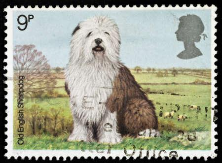 UNITED KINGDOM - CIRCA 1979: A British Used Postage Stamp showing an Old English Sheepdog , circa 1979