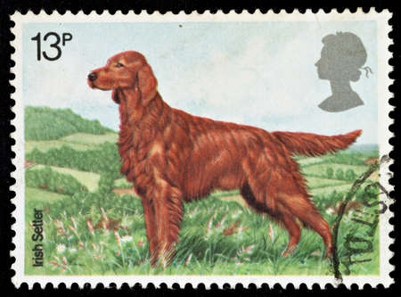 UNITED KINGDOM - CIRCA 1979: A British Used Postage Stamp showing an Irish Setter , circa 1979