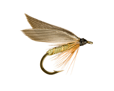lure: Grey Winged Olive Wet Trout Fishing Fly Isolated on White Background  Stock Photo