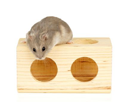 Nano criceto sul blocco di legno