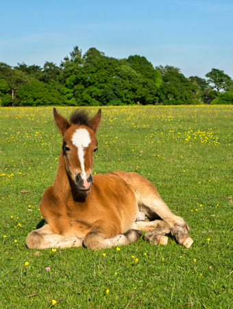 Young Horse Foal Sitting Upright in Green Field photo