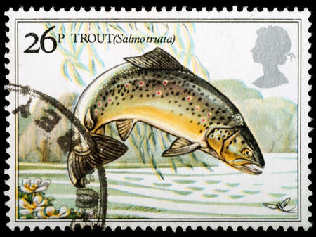 UNITED KINGDOM - CIRCA 1982 : A British Used Postage Stamp showing Brown Trout Fish, circa 1982
