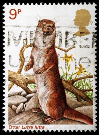 REGNO UNITO - CIRCA 1977: Un britannico usato francobollo che celebra British Wildlife, mostrando una lontra, circa 1977 Editoriali