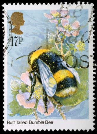 bombus: UNITED KINGDOM - CIRCA 1985: A British Used Postage Stamp showing Bumblebee, circa 1985