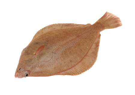 Dab Fish  Limanda limanda  Isolated on White Background Stock Photo
