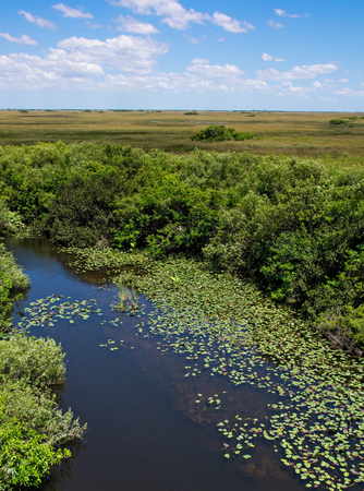 sawgrass: Florida Everglades View at Shark Valley showing Wetlands and Sawgrass Prairie Stock Photo