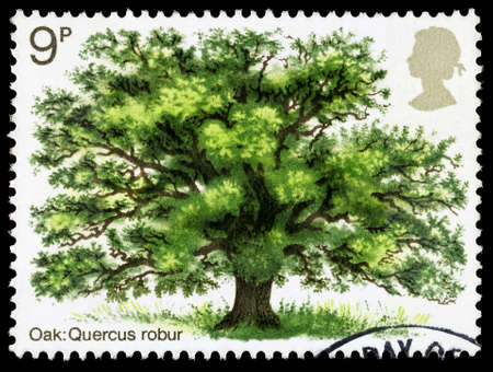 english oak: UNITED KINGDOM - CIRCA 1973: A used postage stamp printed in Britain celebrating British Trees showing an Oak Tree, circa 1973