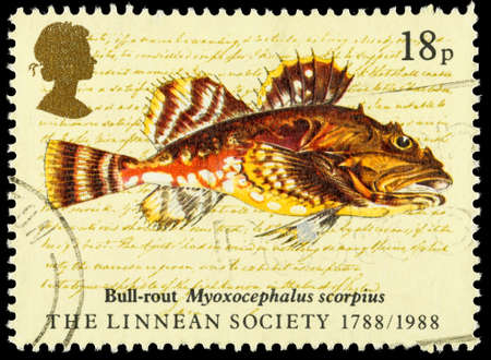 franked: UNITED KINGDOM - CIRCA 1988: A used postage stamp printed in Britain celebrating the Bicentenary of the Linnean Society showing Sea Scorpion Fish, circa 1988 Editorial