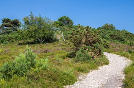 heathland: Gravel Path Across Heathland at Arne in Dorset