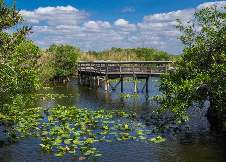 Anhinga Trail Boardwalk through the Everglades National Park, Florida Stock Photo