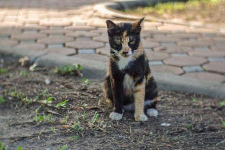 parti-colour cat