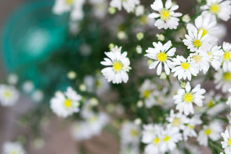white aster flowers in green vase on wooden table