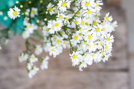 White aster flowers in green vase on wooden table stock photo stock photo white aster flowers in green vase on wooden table mightylinksfo