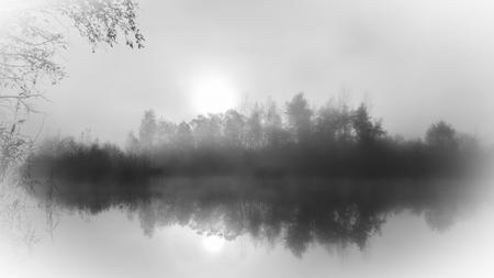 reflexion: la reflexión del árbol lago brumoso